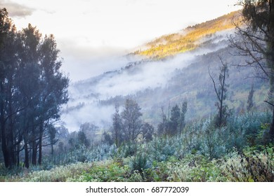 Forested mountain slope in low lying cloud in mist in a scenic landscape view.