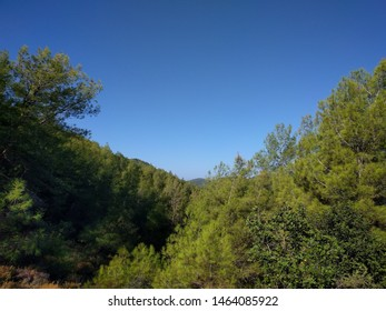 The forested slopes above Kayakoy, Turkey