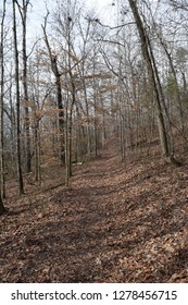 Forested trail in Big Hill Pond State Park Tennessee