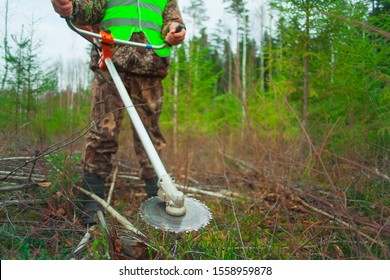 The forester holds a trimmer in his hands and looks after the young Christmas trees. Forestry and afforestation. Trimmer disc close up.