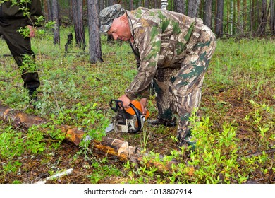 The forester makes an index of the direction of sanitary felling of wood in the Siberian taiga and cuts a tree with a chainsaw in the forest.