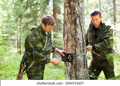 Foresters install camera-photo traps with infrared radiation and a motion detector, attached by straps on a tree for automatic photography or video shooting of wildlife in the forest.
