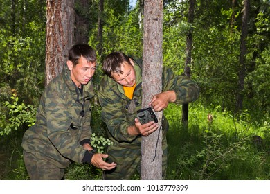 Foresters install cameras of a photo-trap with infrared radiation and a motion detector, attached by straps on a tree, photograph animals and wildlife in the Siberian taiga.