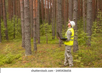 A forestry engineer works with a computer in a pine forest. Forester in a white helmet and work clothes.