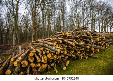 Forestry: Once fresh timber is cut it can be stacked to mature or chopped up and sold as logs, as in this example.