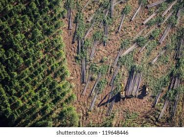 Forestry Plantation Aerials of harvesting