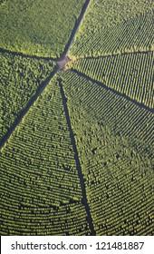 forestry plantations aerials