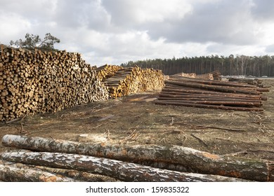 Forestry and timber harvesting in Poland