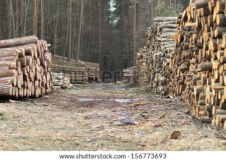 Forestry Timber Harvesting Poland Stock Photo Edit Now 156773693