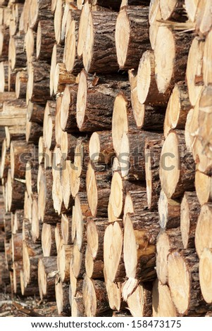 Forestry Timber Harvesting Poland Stock Photo Edit Now 158473175