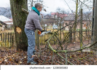 Forestry worker - lumberjack works with chainsaw. He cuts a big tree in forest.
