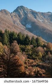 Forests in Agudes peak, Montseny Natural Park, Barcelona
