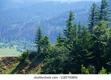 Forests cover the steep cliffs of the Columbia River Gorge dividing Oregon from Washington