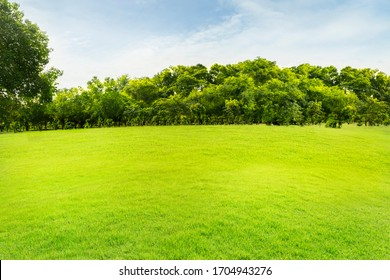 Forests and green lawns and dense trees With clear skies