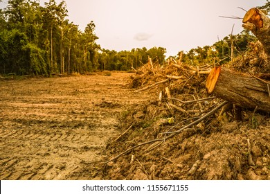 Forests that were invaded by human beings are the cause of global warming.