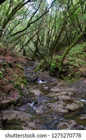 Forests of the Tilden regional park, Bay Area, California
