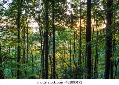 Forest.Trees.