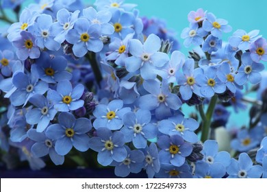 Forget me not blue spring flowers