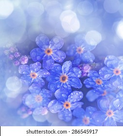 Forget me not flower with rain drops