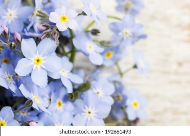 Forget-me-not flowers on wooden background