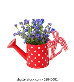 Forget-me-not flowers in red  watering-can isolated on white background