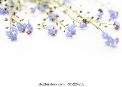 forget-me-not isolated on white. floral background for wedding , celebration, women's day or mother's day
