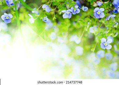 Forget-me-not tender  flowers blossoming in spring time with water reflection, natural floral background