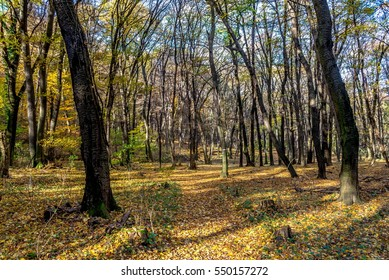 Forgotten forest path at autumn, November, covered with colorful foliage