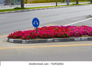 Fork junction traffic sign on road with flowerbed. Blue bifurcation sign with two arrows.