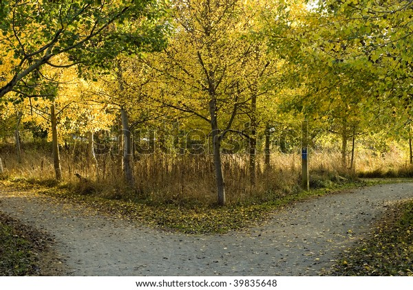 Fork in a woodland path in autumn