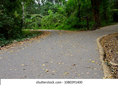 The forked road with fallen leaves in the forest. The abstract concept of decision, divergence, choice and option. The Road Not Taken.