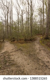 A forked trail in a forest.  St. Mary's River State Park, Leonardtown, MD, USA.