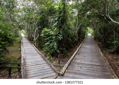 Forked wooden trail in the jungle on the way to Camp Leakey, the most famous feeding station for Orangutans inside Tanjung Puting National Park, Kumai, Borneo, Indonesia
