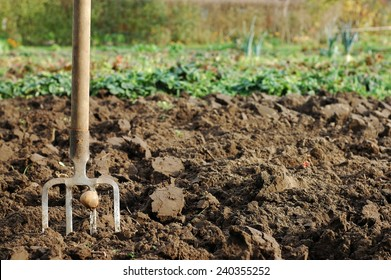 Forks in the ground