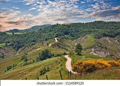 Forli-Cesena, Emilia Romagna, Italy: landscape of the Apennine mountains with flowering broom, dirt road, forest and pastures