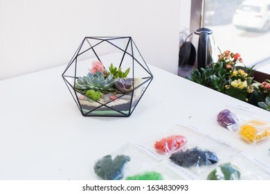 Form of glass and metal for plants and interior, succulents, sand, earth and plants. Home or office decoration and interior design. Planting plants and creating a design