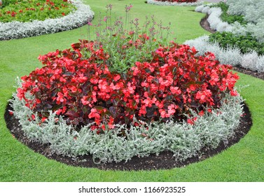 Formal circular flower display border with traditional red begonia blooms.