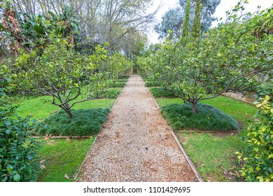 formal english citrus orchard with traditional path and detail