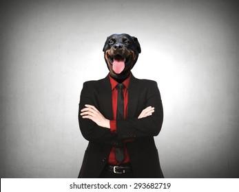Formal wear business man with rottweiler dog head