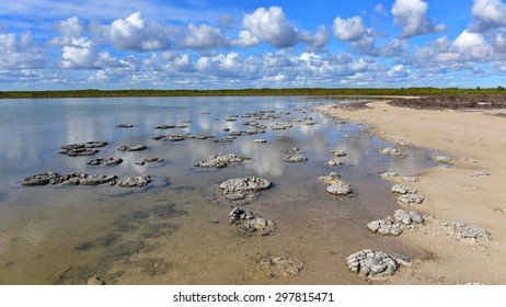 Formation of stromatolites in Lake Thetis in Jurien Bay, Western Australia