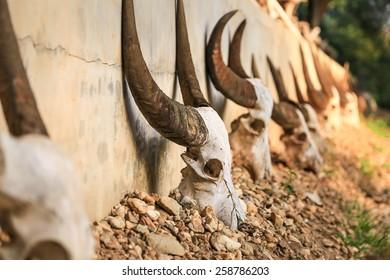 The former buffalo