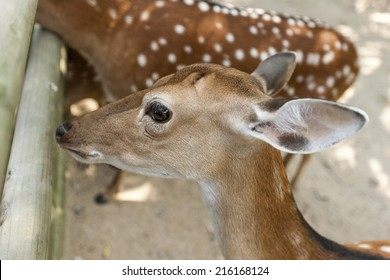Formosan deer in the seoul forest park