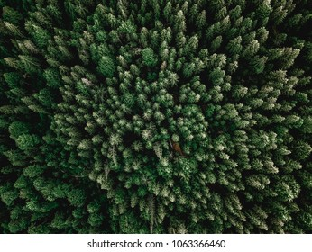 Forrest aerial shot with trees sunlight