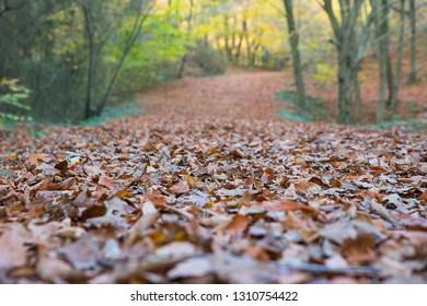 forrest autumn landscape