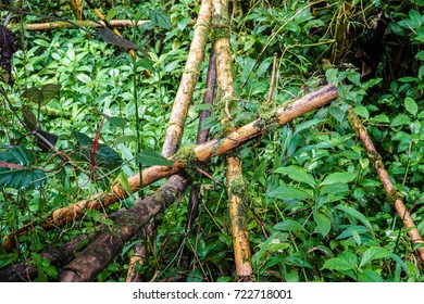 Forrest Bamboo