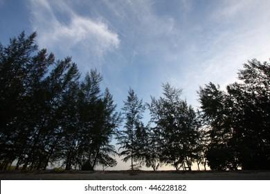 Forrest, blue sky