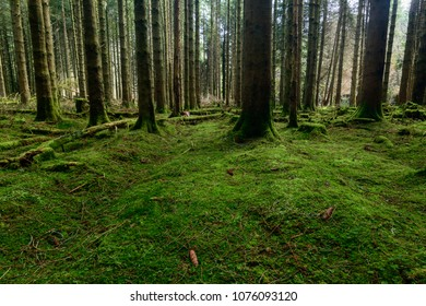 Forrest in the Brecon Beacons