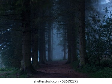 Forrest By Dawn