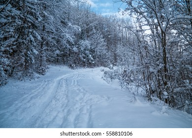 A forrest covered in snow during winter