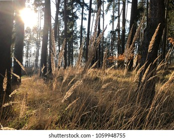Forrest grass in sunny forrest